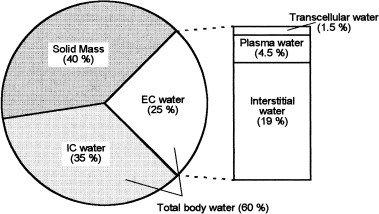 Wassereinlagerungen loswerden & vermeiden: Ein How-To Guide mit 9 praktischen Tipps