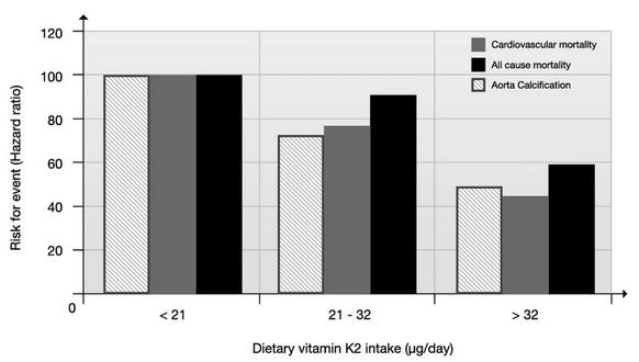 Die Rotterdam-Studie stellt eine mengenmßige Abhängigkeit zwischen der Vitamin K2-Aufnahme und dem Risiko für Herz-Kreislauf-Erkrankungen her. Mehr Vitamin K2 in der Ernährung schlug sich in einem geringeren Risiko nieder.