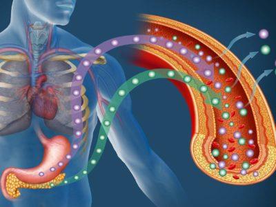 Effektive Basissupplemente & Supplement Stacks: Insulinsensitivität & Glukoseaufnahme