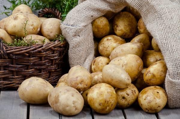 Wurzelgemüse und Knollen, darunter (Süß-)Kartoffeln, Maniok und Yam sind exzellente und nahrhafte Vitamin- und Mineralstoffquellen. Sie enthalten zudem sehr viel Stärke, die insbesondere kärperlich schwer arbeitenden Menschen und aktivien Sportlern zu Gute kommt. (Bildquelle: Fotolia /Olo)