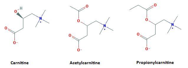 ungssteigernde Supplemente - Acetyl-L-Carnitin (ALCAR) | Studienlage, Praxis & Einnahme