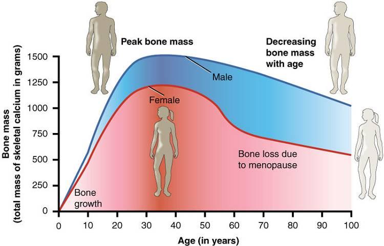 Osteopenie & Osteoporose vorbeugen: Wie oft solltest du trainieren? | Studien Review