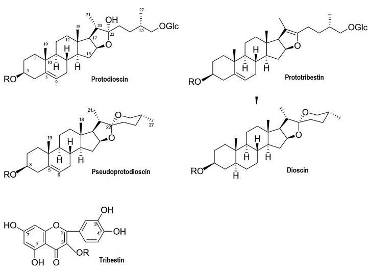 Leistungssteigernde Supplemente – Burzeldorn (Tribulus terrestris) | Wirkung & Studienlage