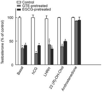Die In Vitro Studie zeigt die Auswirkungen einer Vorbehandlung (15 Minuten) der Ledydig-Zwischenzellen mit Grüntee-Textrakt (GTE) und dem dominierenden Grüntee-Katechin Epigallocatechingallat (EGCG) auf die Testosteronproduktion eine Stunde später. Man kann hier deutlich den prozentualen Abfall des Testosterons sehen (weiße Vs. farbige Balken).