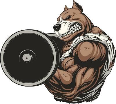 Geiler (Hunde-)Scheiss? Ein DoggCrapp Trainingsguide