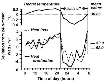 Zirkadiane Muster der Körperkerntemperatur (CBT), der Wärmeproduktion und des Wärmeverlustes (neu gezeichnet von Aschoff, zirkadiane Kontrolle der Körpertemperatur55) (Durchschnittsalter von acht Frauen, 22-26 Jahre, aufgenommen während der Lutealphase bei einer Umgebungstemperatur von 281°C, nackt, in Rückenlage im Bett). Anmerkung: Die CBT nimmt ab, wenn der Wärmeverlust die Wärmeproduktion übersteigt. (Bildquelle: Kräuchi et al., 2007)