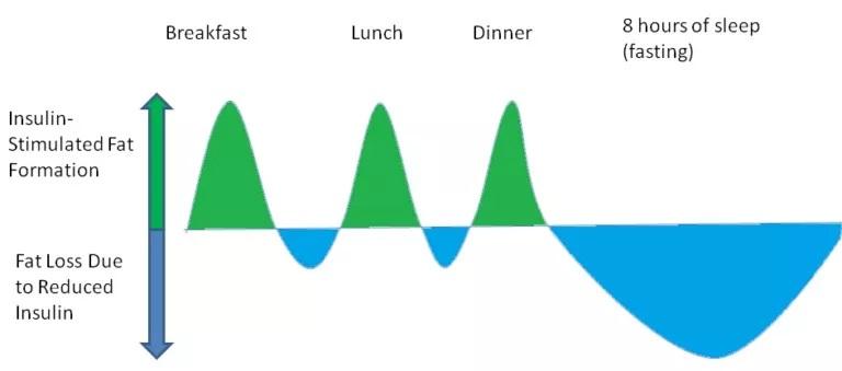 Schematische Darstellung der Balance zwischen Lipogenese (gründe Fläche) und Lipolyse (blaue Fläche). (Bildquelle: Krieger, 2018).