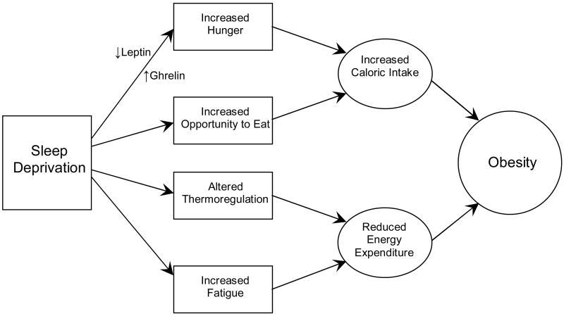 Potenzielle Mechanismen, die dafür Sorgen, dass durch Schlafentzug bzw. Schlafmangel das Risiko für Übergewicht ansteigt. (Bildquelle: Patel & Hu, 2018)