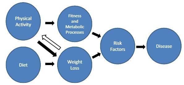 Konzeptuelles Modell zur Veranschaulichung der potenziellen Pfade, über die körperliche Aktivität die Energiebilanz, das Körpergewicht und damit zusammenhängende Gesundheitsergebnisse beeinflussen kann. (Bildquelle: Jakicic & Davis, 2011)