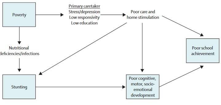 Hypothesen über den Zusammenhang zwischen Armut, Wachstumshemmung (Stunting), kindlicher Entwicklung und schulischen Leistungen. (Bildquelle: Grantham-McGregor et al., 2007)